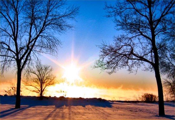 sun trees cold